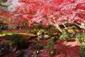 宝厳院紅葉